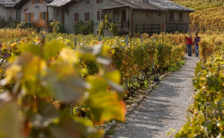 The Martigny Vineyards Trail