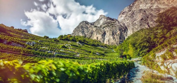 The Wine Route, from Martigny to Loèche