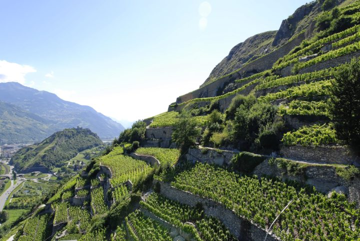 Vineyard Tour, Sion and its region